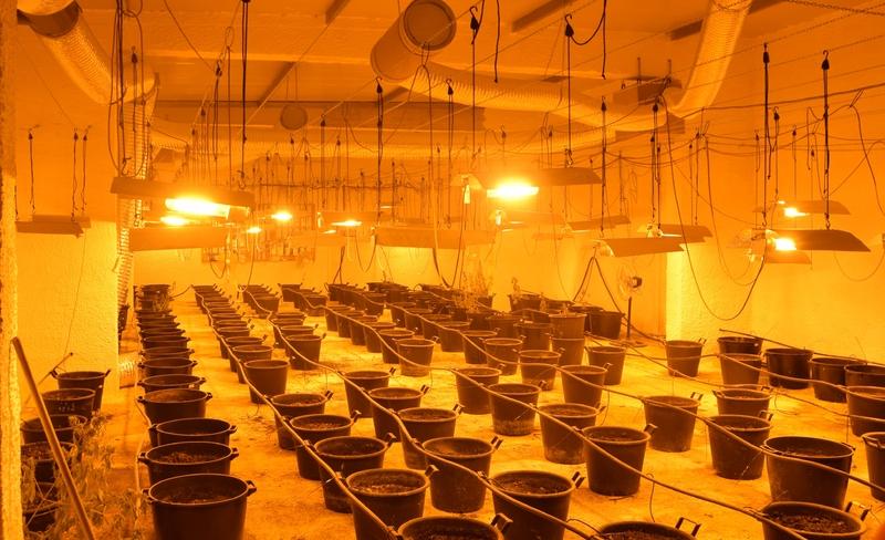 Salemi.  Financiers discover experimental greenhouse greenhouse for growing marijuana thumbnail