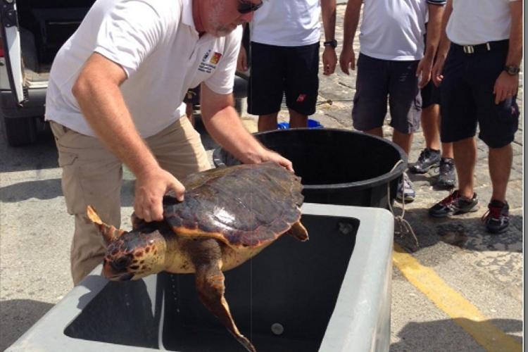 Consegnati alla guardia costiera i materiali per il for Contenitore tartarughe